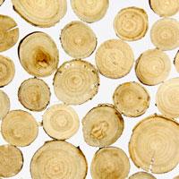 Invision mit eingebetteten Holzscheiben